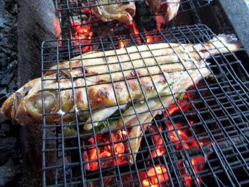 Cá bã trầu nướng