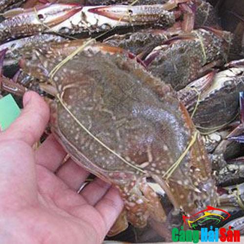 ghẹ biển tự nhiên
