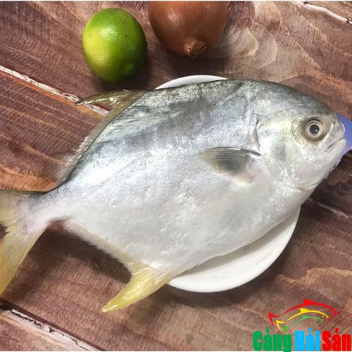 Cá Chim trắng tươi ngon