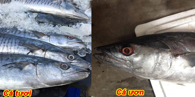 cách phân biệt cá tươi hay cá ươn