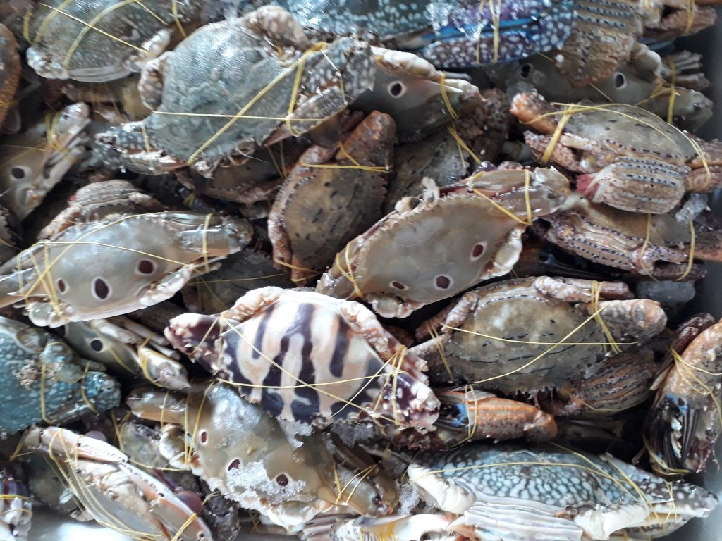 các loại ghẹ biển ở việt nam