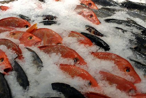 hải sản cấp đông có tốt không